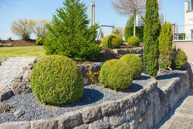 iglaki do ogrodu, mało wymagające rośliny, ogrody, ogród prosty w utrzymaniu, iglaki w ogrodzie kompozycje