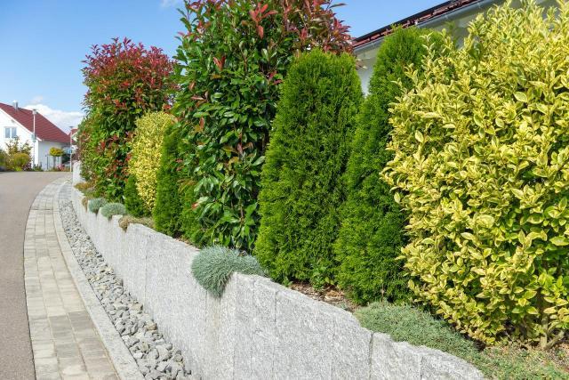 ogrody, ogród prosty w utrzymaniu, iglaki w ogrodzie kompozycje, iglaki do ogrodu, mało wymagające rośliny
