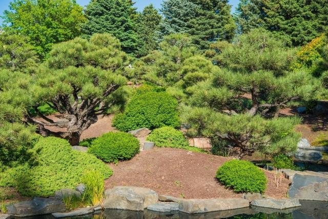 ogród prosty w utrzymaniu, iglaki w ogrodzie kompozycje, iglaki do ogrodu, mało wymagające rośliny, ogrody