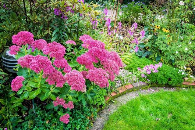 ogrody, rośliny lata, krzewy kwitnące latem, ogród w kwiatach, kompozycje z krzewów
