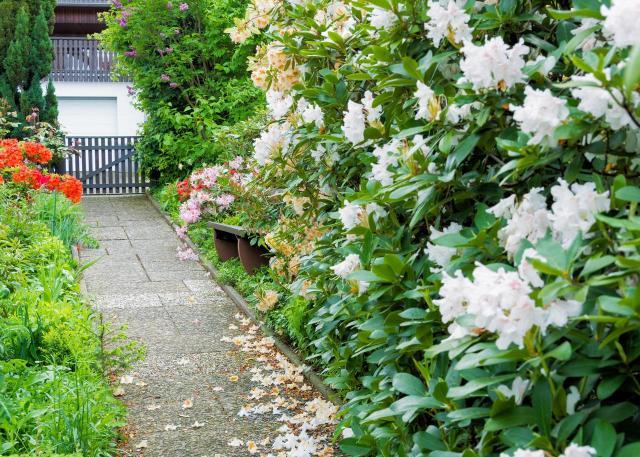 rośliny lata, krzewy kwitnące latem, ogród w kwiatach, kompozycje z krzewów, ogrody