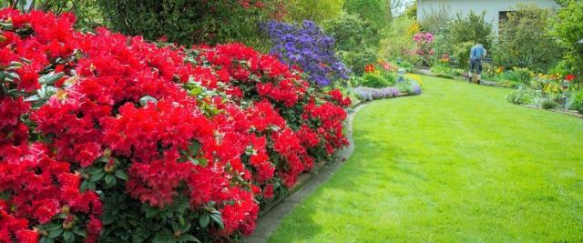 Krzewy ozdobne kwitnące latem , które w szybkim tempie ozdobią Twój ogród
