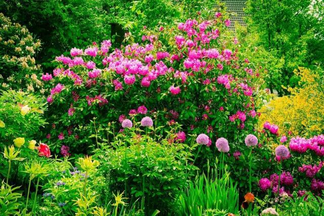 krzewy kwitnące latem, ogród w kwiatach, kompozycje z krzewów, ogrody, rośliny lata