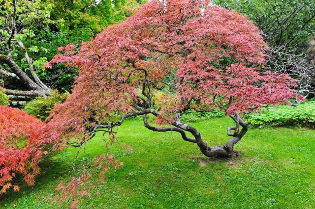 ogród pokazowy, kompozycje roślinne, rośliny do ogrodu, rośliny, ogród, projekt ogrodu