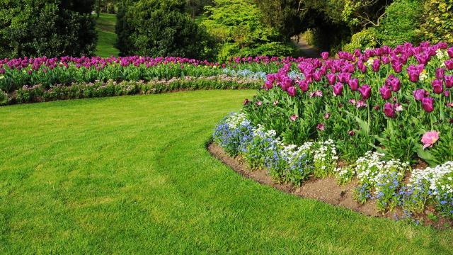 projekt ogrodu, galeria zdjęć, ogród pokazowy, kompozycje roślinne, rośliny do ogrodu, rośliny, ogród