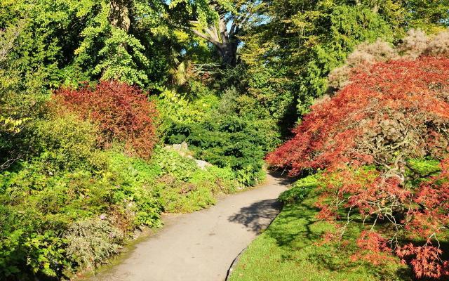 rośliny, ogród, projekt ogrodu, kompozycje roślinne, kompozycje do ogrodu, rośliny do ogrodu