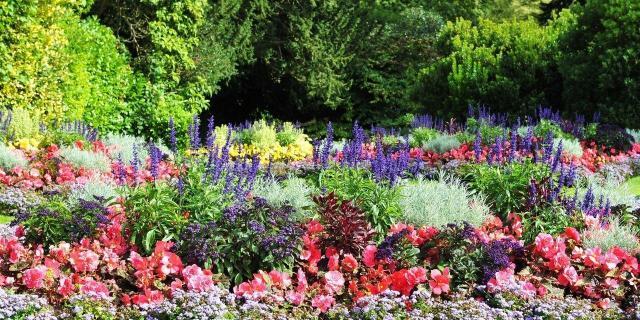 ogród, projekt ogrodu, kompozycje roślinne, kompozycje do ogrodu, rośliny do ogrodu, rośliny