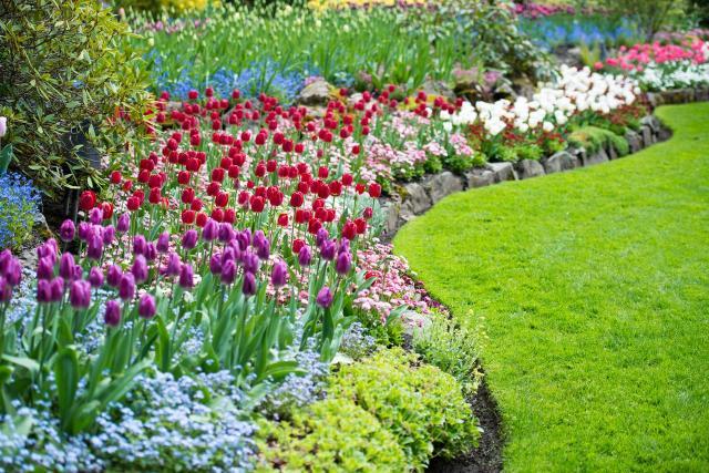kompozycje roślinne, kompozycje do ogrodu, rośliny do ogrodu, rośliny, ogród, projekt ogrodu