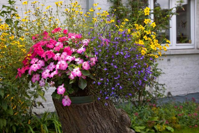 10 kompozycji roślinnych do ogrodu, które będą  wyglądać ślicznie przed Twoim domem