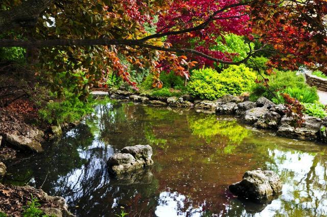 ogród, galeria zdjęć, ogród naturalistyczny, oczko wodne, oczko w ogrodzie