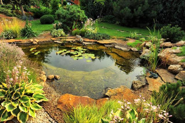 ogród naturalistyczny, oczko wodne, oczko w ogrodzie, ogród, galeria zdjęć