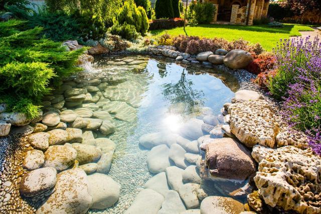 oczko wodne, oczko w ogrodzie, ogród, galeria zdjęć, ogród naturalistyczny