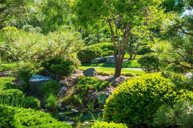 krzewy i drzewa iglaste, ogród z iglakami, ogrody przydomowe, jak urządzić ogród, kompozycje iglaków