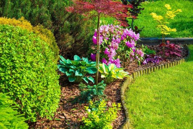 ogrody przydomowe, jak urządzić ogród, kompozycje iglaków, krzewy i drzewa iglaste, ogród z iglakami