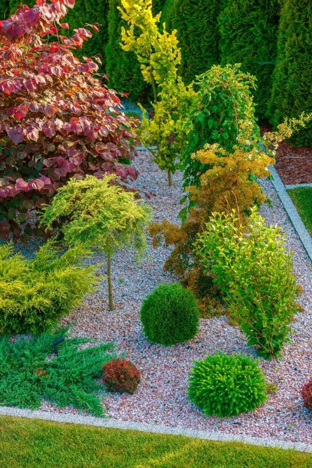 kompozycje iglaków, krzewy i drzewa iglaste, ogród z iglakami, ogrody przydomowe, jak urządzić ogród
