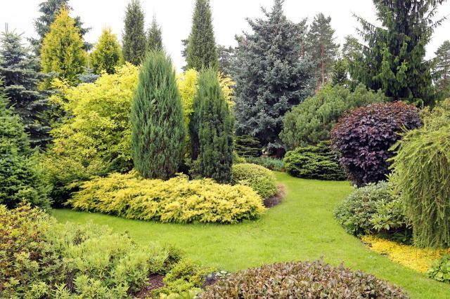 ogród z iglakami, ogrody przydomowe, jak urządzić ogród, kompozycje iglaków, krzewy i drzewa iglaste