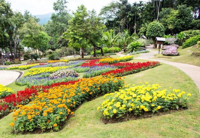ogród, projekt ogrodu, rabaty faliste, rabaty kwiatowe, kompozycje roślinne, rośliny