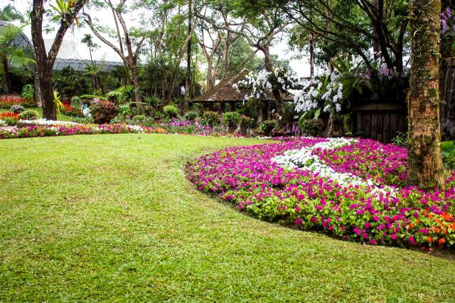 projekt ogrodu, rabaty faliste, rabaty kwiatowe, kompozycje roślinne, rośliny, ogród