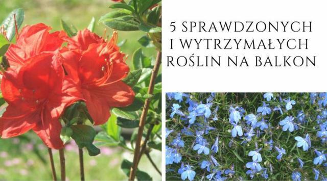 5 sprawdzonych i wytrzymałych roślin na balkon