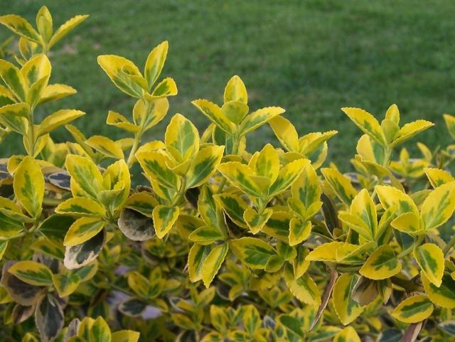 kwiaty na balkon, rośliny zwisające, rośliny wytrzymałe, rośliny odporne, kwiaty do ogrodu, rośliny dla początkujących, kwiaty balkonowe