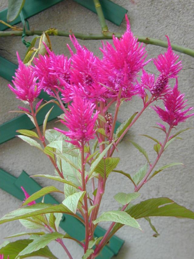 rośliny wytrzymałe, rośliny odporne, kwiaty do ogrodu, rośliny dla początkujących, kwiaty balkonowe, kwiaty na balkon, rośliny zwisające