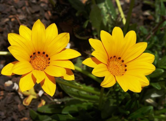 rośliny odporne, kwiaty do ogrodu, rośliny dla początkujących, kwiaty balkonowe, kwiaty na balkon, rośliny zwisające, rośliny wytrzymałe