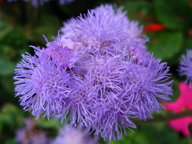 rośliny dla początkujących, kwiaty balkonowe, kwiaty na balkon, rośliny zwisające, rośliny wytrzymałe, rośliny odporne, kwiaty do ogrodu