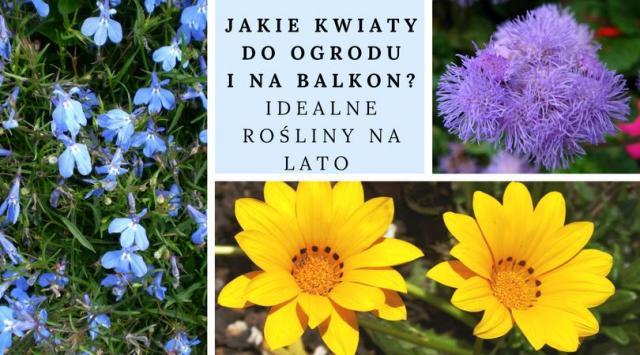 Jakie kwiaty do ogrodu i na balkon? Idealne rośliny na lato
