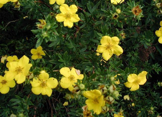 rośliny wytrzymałe, rośliny odporne, kwiaty zwisające na balkon, kwiaty balkonowe, kwiaty na balkon, rośliny zwisające