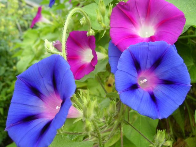 kwiaty balkonowe, kwiaty na balkon, rośliny zwisające, rośliny wytrzymałe, rośliny odporne, kwiaty zwisające na balkon