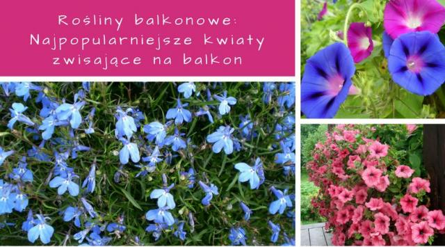 Rośliny balkonowe: Najpopularniejsze kwiaty zwisające na balkon