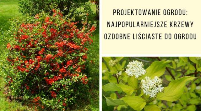 Projektowanie ogrodu: Najpopularniejsze krzewy ozdobne liściaste do ogrodu