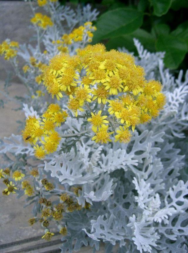 rośliny jednoroczne z rozsady, rośliny jednoroczne z siewu, rośliny na balkon, kwiaty balkonowe, rośliny jednoroczne