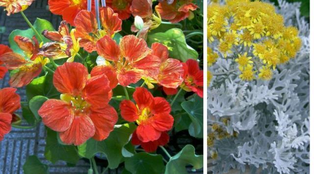 4 niezawodne rośliny jednoroczne na balkon i taras