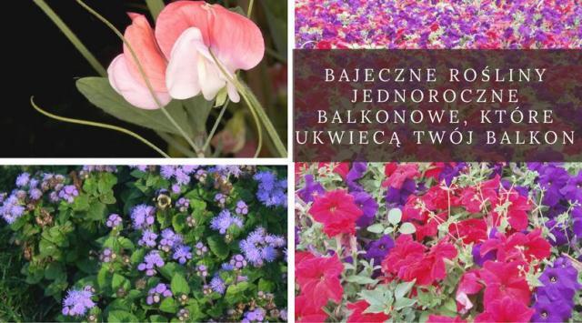 Bajeczne rośliny jednoroczne balkonowe, które ukwiecą Twój balkon