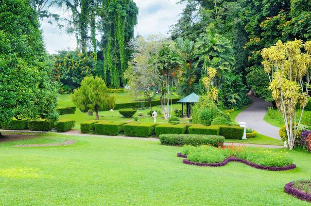 magiczne ogrody, aranżacje ogrodów, projekty ogrodów, ogrody naturalistyczne, ogród, kompozycje roślinne
