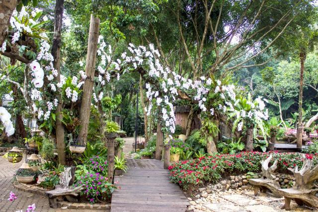 projekty ogrodów, aranżacja ogrodów, ogrodu przydomowe, ogrody duże, ogrody angielskie, ogród, kompozycje roślinne