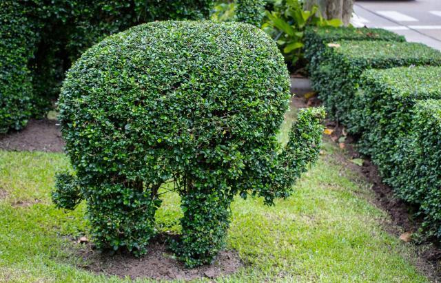 ogrody duże, ogrody angielskie, ogród, kompozycje roślinne, projekty ogrodów, aranżacja ogrodów, ogrodu przydomowe
