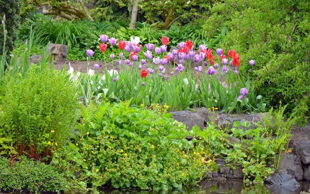 ogród przydomowy, ogród wiejski, kompozycje roślinne, ogród w stylu rustykalnym, ogród rustykalny