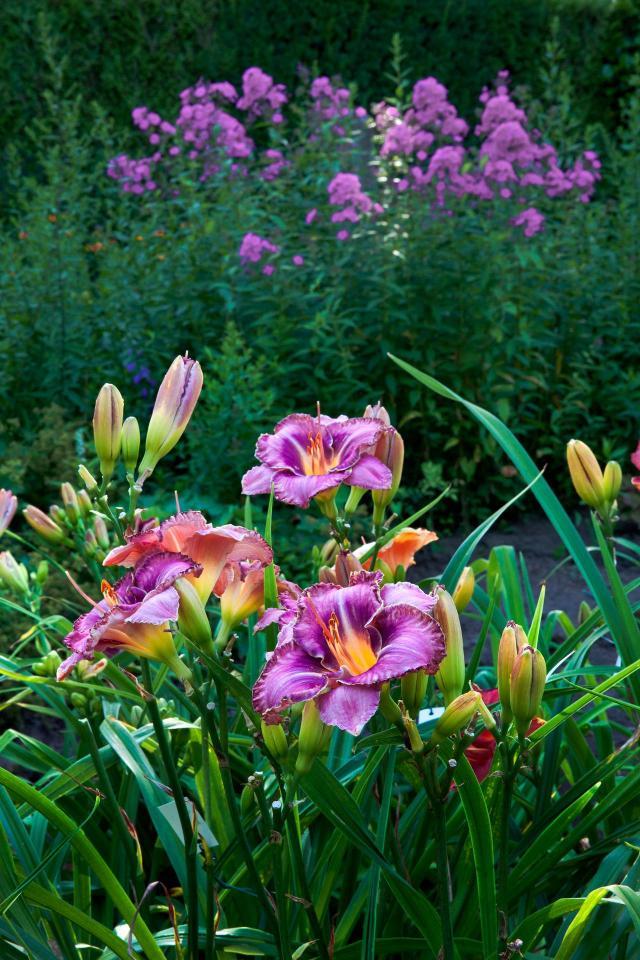 kompozycje roślinne, ścieżki w ogrodzie, ogród, inspiracje, jak urządzić ogród, projekt ogrodu, aranżacja ogrodu