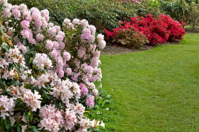 ścieżki w ogrodzie, ogród, inspiracje, jak urządzić ogród, projekt ogrodu, aranżacja ogrodu, kompozycje roślinne