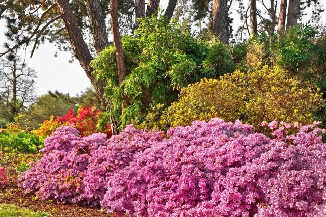 inspiracje, jak urządzić ogród, projekt ogrodu, aranżacja ogrodu, kompozycje roślinne, ścieżki w ogrodzie, ogród