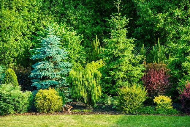 krzewy, iglaki, krzewy ozdobne, iglaki ozdobne, kompozycje roślinne, ogród przydomowy, rośliny do ogrodu