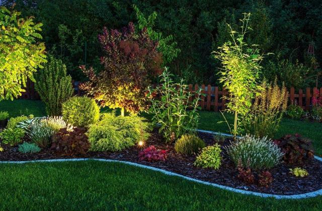 iglaki ozdobne, kompozycje roślinne, ogród przydomowy, rośliny do ogrodu, krzewy, iglaki, krzewy ozdobne