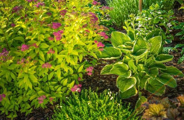 ogród przydomowy, rośliny do ogrodu, krzewy, iglaki, krzewy ozdobne, iglaki ozdobne, kompozycje roślinne