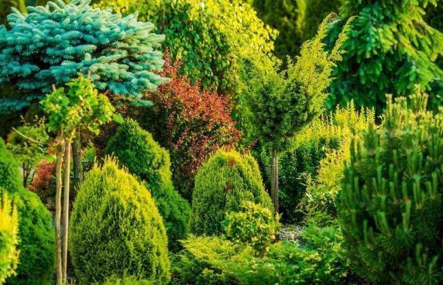 rośliny do ogrodu, krzewy, iglaki, krzewy ozdobne, iglaki ozdobne, kompozycje roślinne, ogród przydomowy