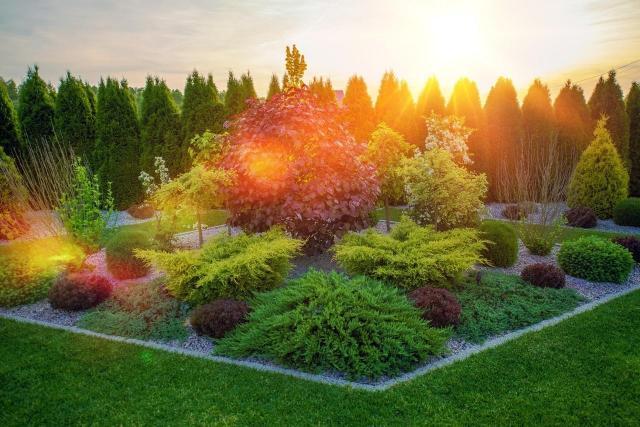 Galeria zdjęć: Najpiękniejsze kompozycje krzewów do ogrodu