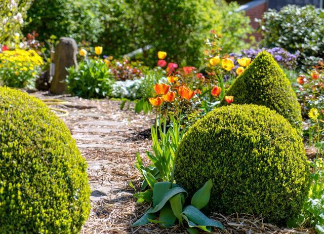 krzewy, iglaki, krzewy ozdobne, iglaki ozdobne, kompozycje roślinne, ogród przydomowy, rośliny do ogrodu, ogród nowoczesny