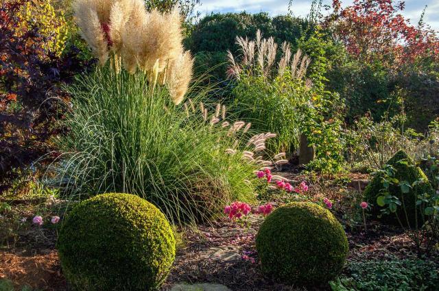 iglaki, krzewy ozdobne, iglaki ozdobne, kompozycje roślinne, ogród przydomowy, rośliny do ogrodu, ogród nowoczesny, krzewy