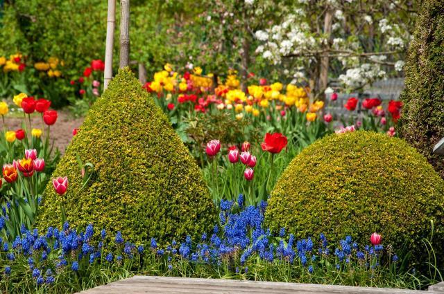 krzewy ozdobne, iglaki ozdobne, kompozycje roślinne, ogród przydomowy, rośliny do ogrodu, ogród nowoczesny, krzewy, iglaki